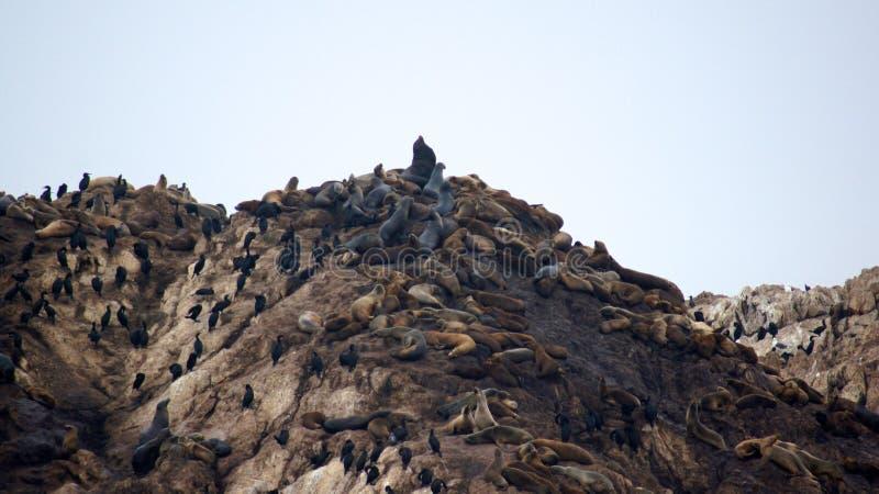 MONTEREY, LA CALIFORNIE, ETATS-UNIS - 6 OCTOBRE 2014 : La roche d'oiseau est l'un des arrêts de les plus populaires le long de la images stock