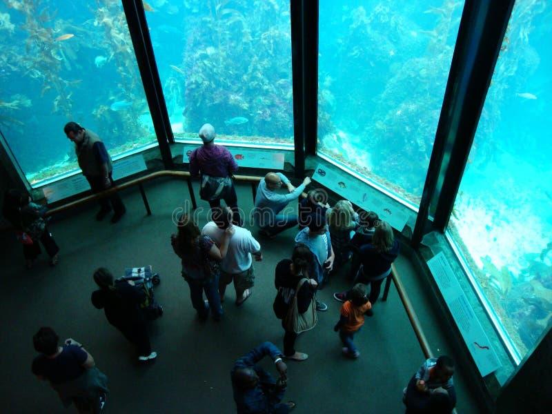 Monterey-Schachtaquarium stockbilder