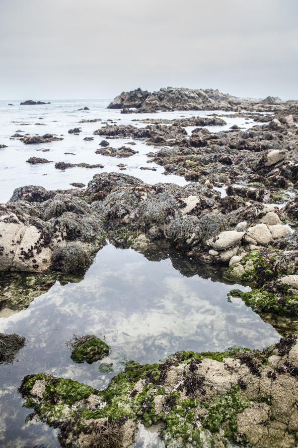 Monterey Tide Pool. The coast of the Monterey National Marine Sanctuary is influenced by constant tidal exchange and wave energy. Tide pools are often left along stock photography