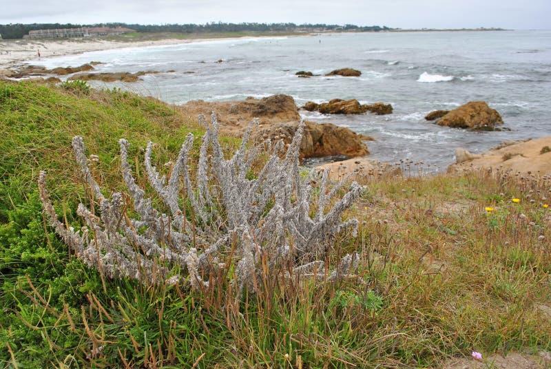 Monterey zatoki plaży sceneria zdjęcia royalty free