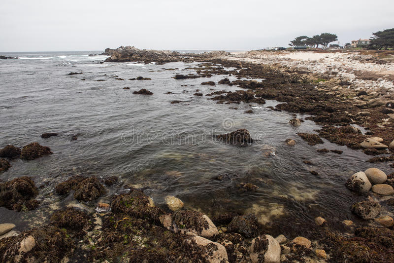 Montereykust stock foto's