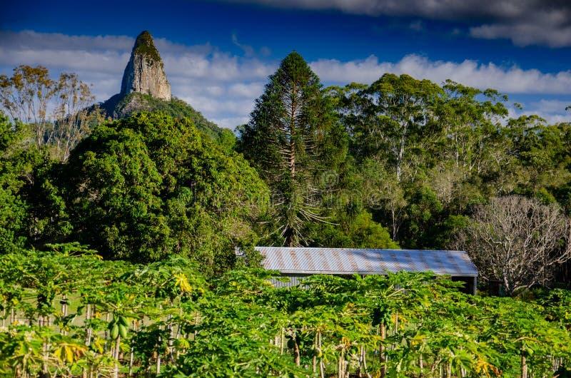 Montering Coonowrin, ett av burkbergen i Queensland, Australien royaltyfria bilder