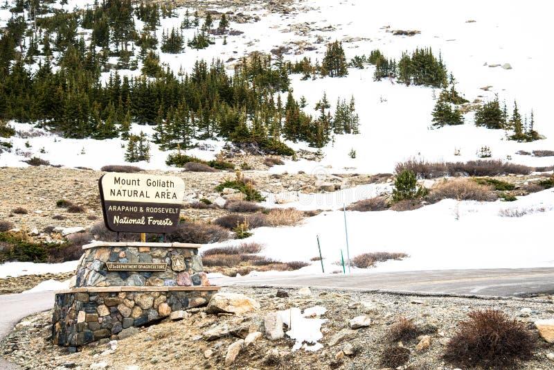 Montering Goliath Natural Area Forest på Mt Evans Colorado arkivfoto
