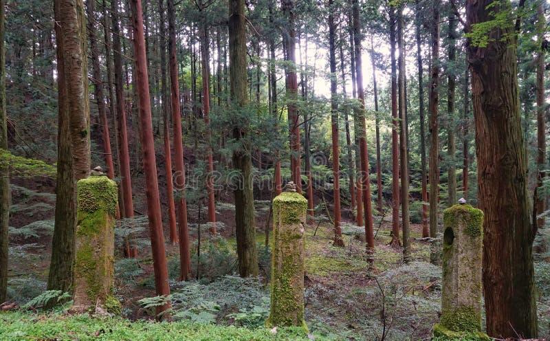 Montering Hiei Trailpath fotografering för bildbyråer