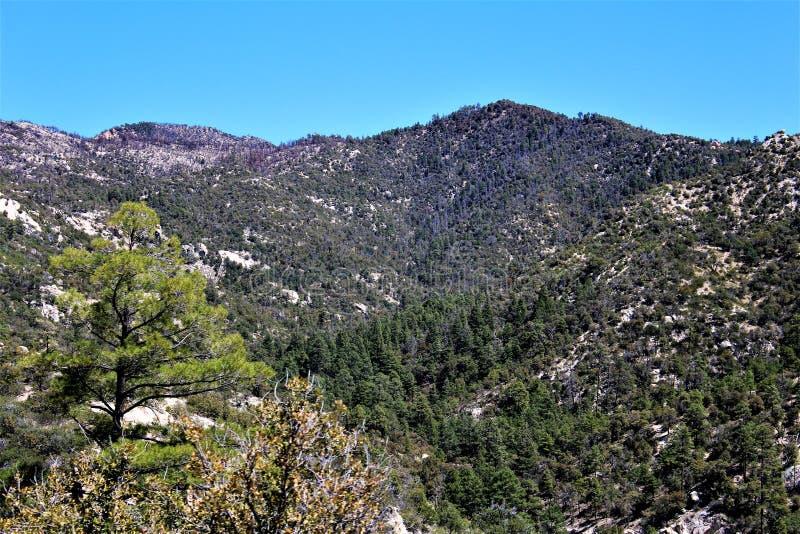 Montering Lemmon, Tucson, Arizona, Förenta staterna arkivbild