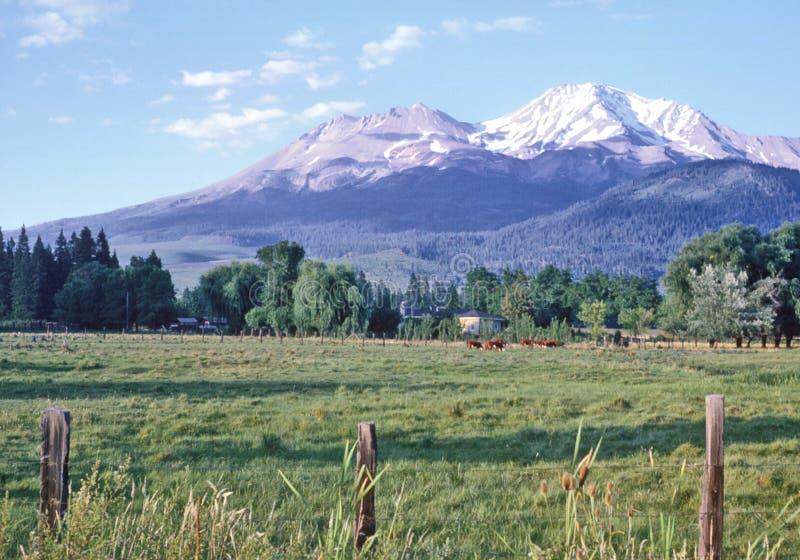 Montering Shasta i sommar royaltyfri bild