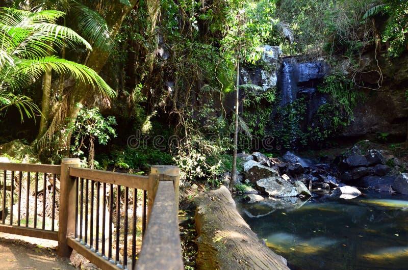 Montering Tamborine Gold Coast Queensland Australien royaltyfria foton