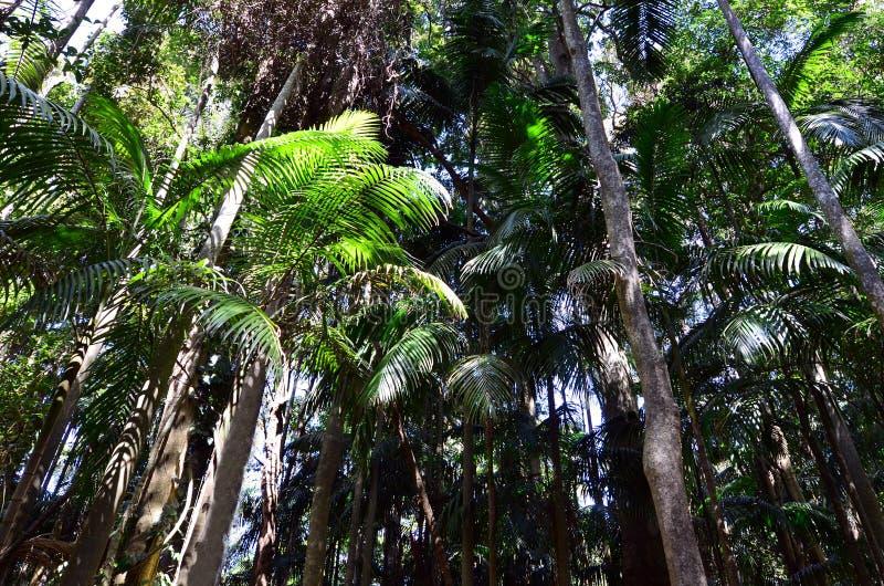 Montering Tamborine Gold Coast Queensland Australien arkivbild