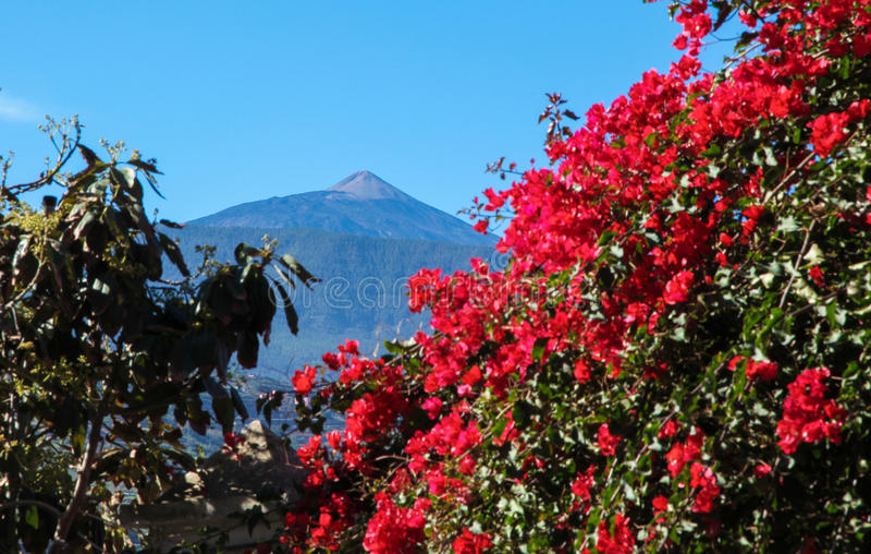 Montering Teide på Tenerife, kanariefågelöar, Spanien arkivbilder