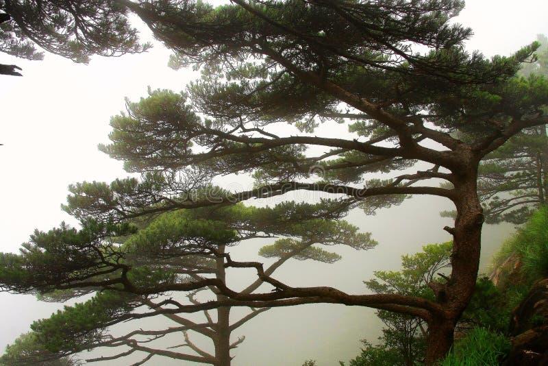 MonteringsHuangshan medborgare Forest Park arkivfoto