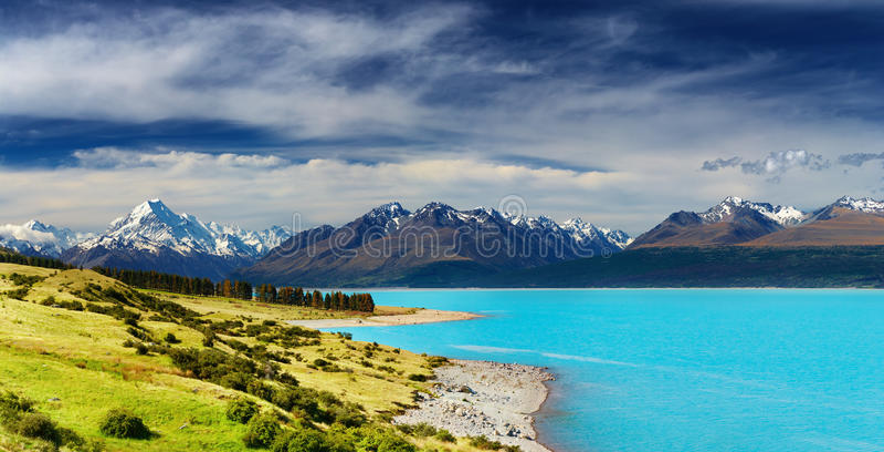 Monteringskock, New Zealand royaltyfri foto