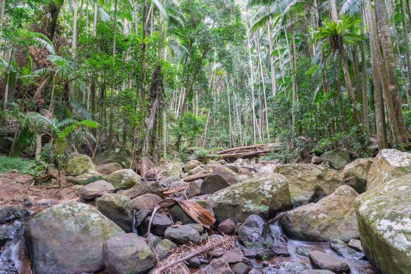 MonteringsTamborine rainforest arkivbilder