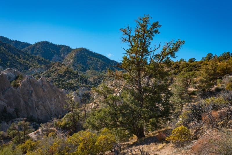 Montes arborizados no deserto de Mojave fotografia de stock