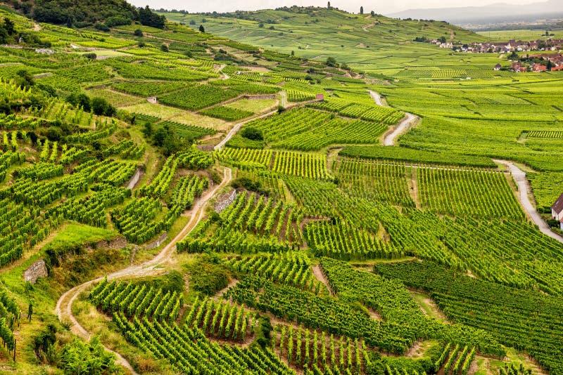 Montes cobertos com os vinhedos na região do vinho de Alsácia, França imagem de stock royalty free