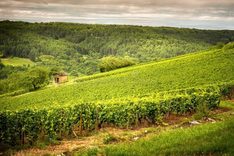 Montes cobertos com os vinhedos na região do vinho de Borgonha, França imagens de stock royalty free