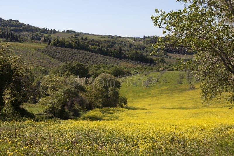 Montes com árvores e rapeseed em Italy imagem de stock
