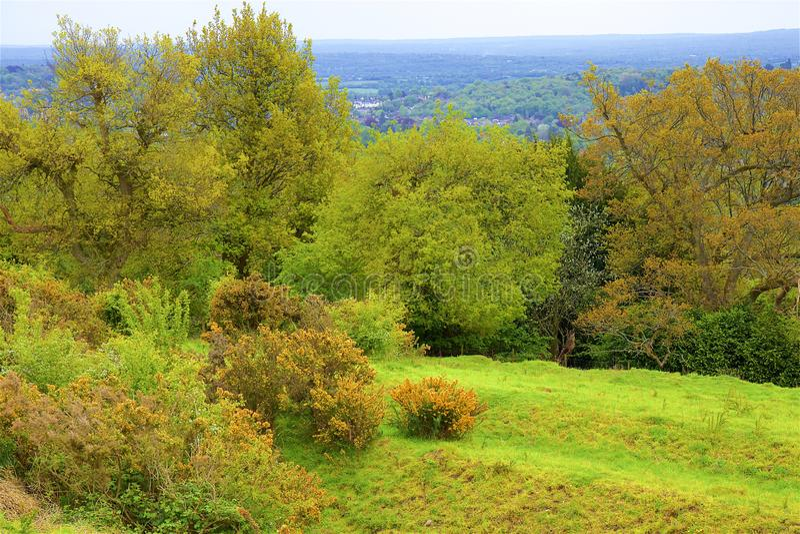 Montes de Surrey, Inglaterra fotografia de stock