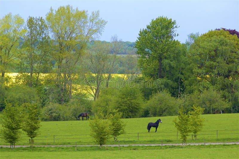 Montes de Surrey, Inglaterra fotografia de stock royalty free