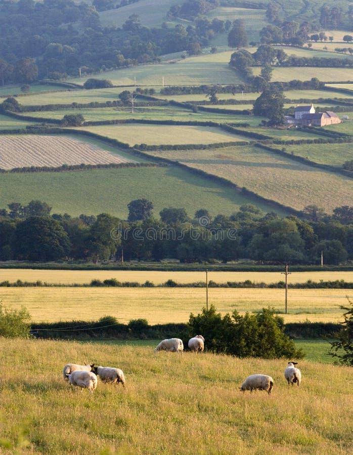 Montes do campo da paisagem imagens de stock