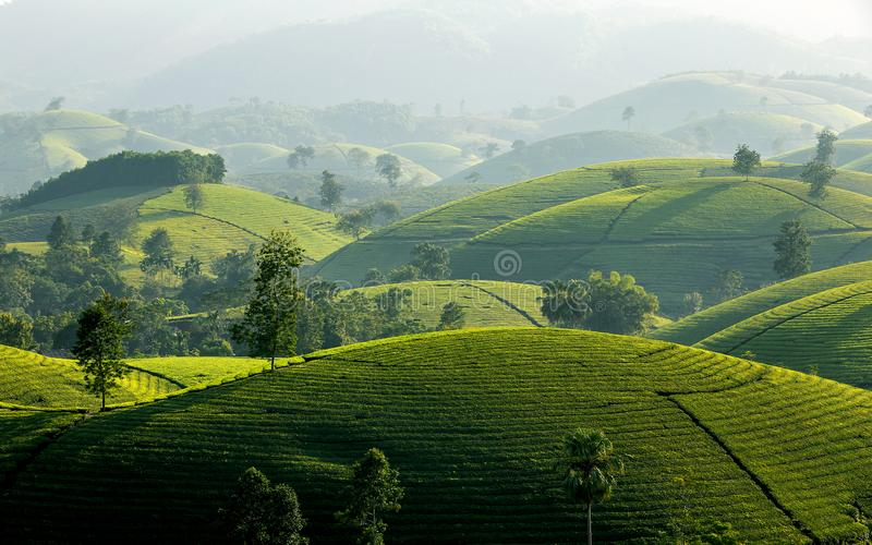 Montes do chá em montanhas longas de Coc fotos de stock