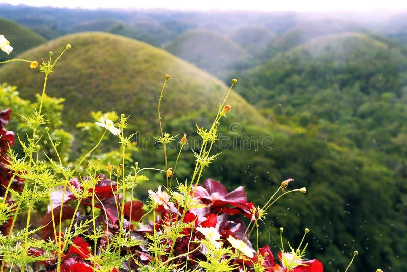 Montes do chocolate Islend de Bohol filipinas foto de stock