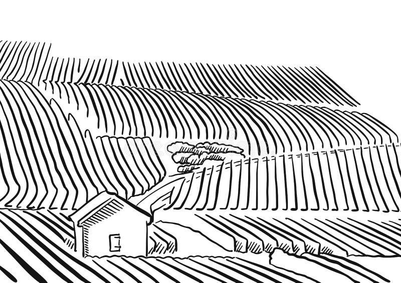 Montes do whith do vinhedo de Provence e casa pequena ilustração do vetor