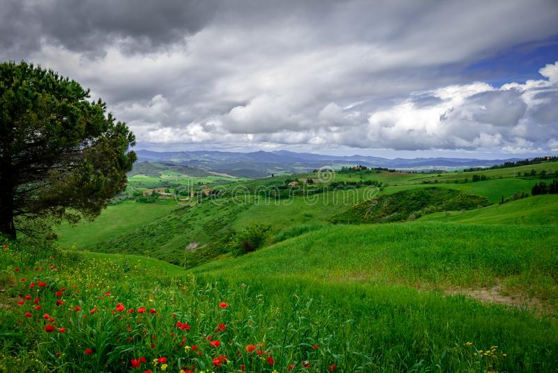 Montes semeados com videiras Campo italiano foto de stock royalty free
