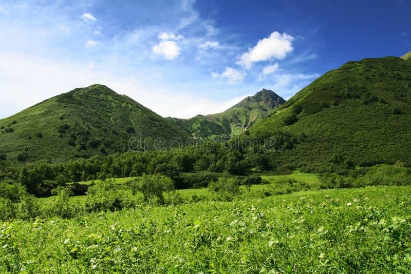 Montes verdes fotografia de stock