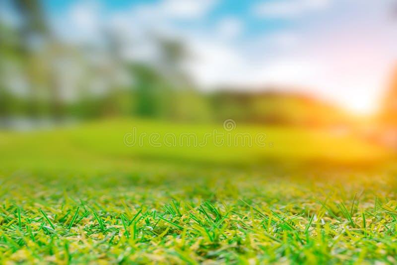 Montes verdes da paisagem da grama do campo foto de stock royalty free