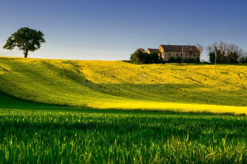 Montes verdes e campos imagens de stock