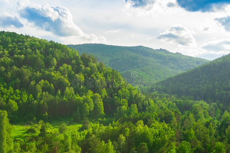 Montes verdes e floresta magníficos da paisagem do verão com as árvores diferentes contra o céu azul Rússia Sibéria imagens de stock royalty free