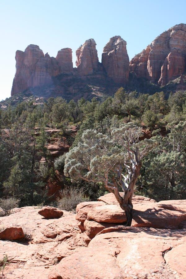 Montes vermelhos Sedona o Arizona da rocha fotos de stock royalty free