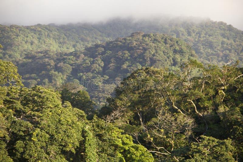 Monteverde雨林哥斯达黎加 免版税图库摄影