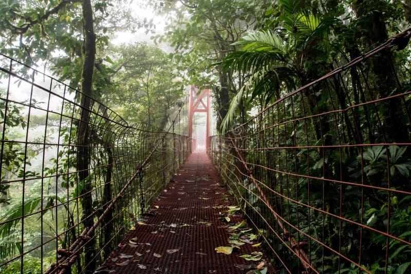 Monteverde chmury las obrazy stock