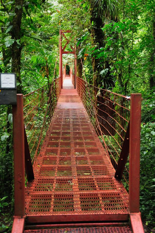 A suspension bridge allows visitors at the Monteverde Cloud Forest Reserve to view the jungle amidst the canopy of trees. The Monteverde Cloud Forest Reserve stock image