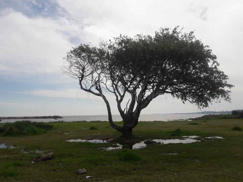 Montevideo Uruguay tree and ocean. Sea, water, beach, travel, tourism stock photo