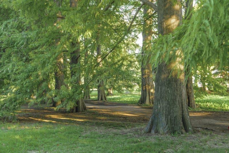 Montevideobotanisk trädgård royaltyfria bilder