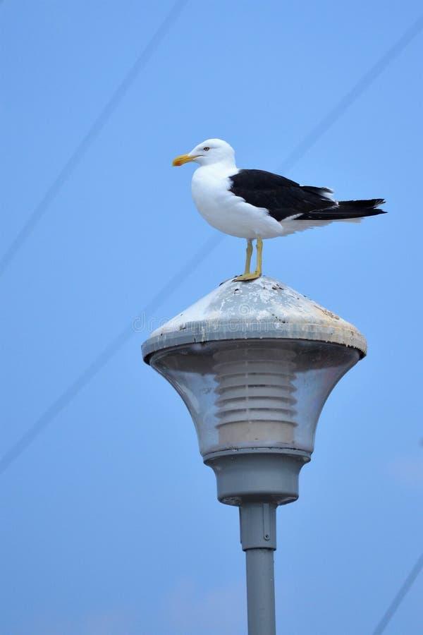 Montevideoport - Uruguay royaltyfri foto