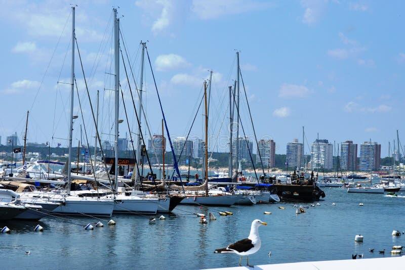 Montevideoport - Uruguay royaltyfria bilder