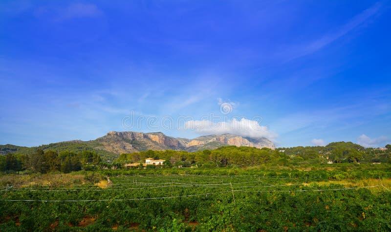 Montgo winnicy w Hiszpania i góra fotografia stock