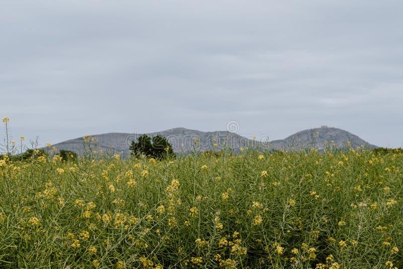 MontgrÃ城堡和花风景 图库摄影