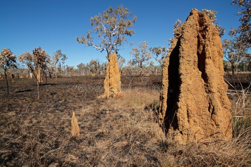 Monticelli della termite della cattedrale, Australia fotografia stock