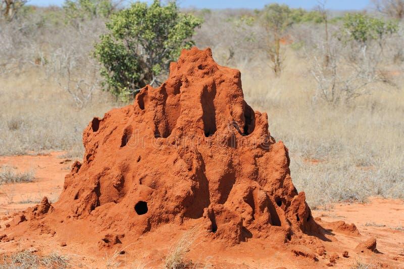 Monticello della termite immagine stock libera da diritti