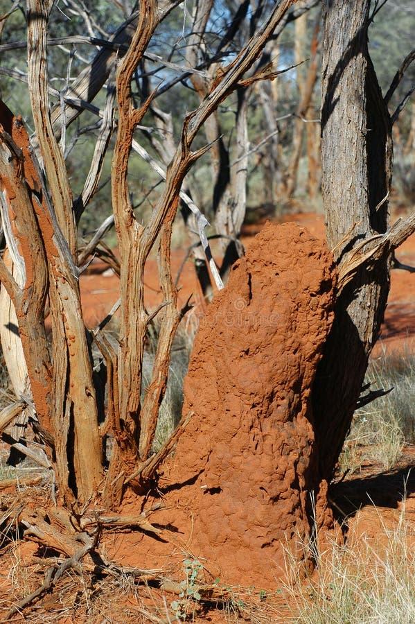 Monticello della termite nel cespuglio australiano immagini stock