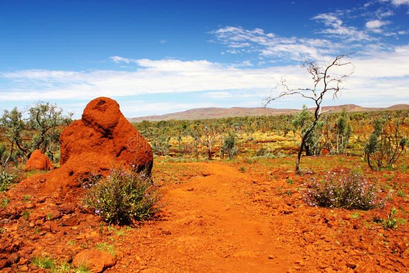 Monticello della termite nell'entroterra australiana, Australia occidentale immagine stock libera da diritti
