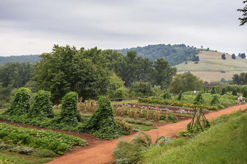 Monticello Farm. CHARLOTTESVILLE, VA - AUGUST 7, 2015: Hillside terrace farm from Thomas Jefferson home Monticello royalty free stock image