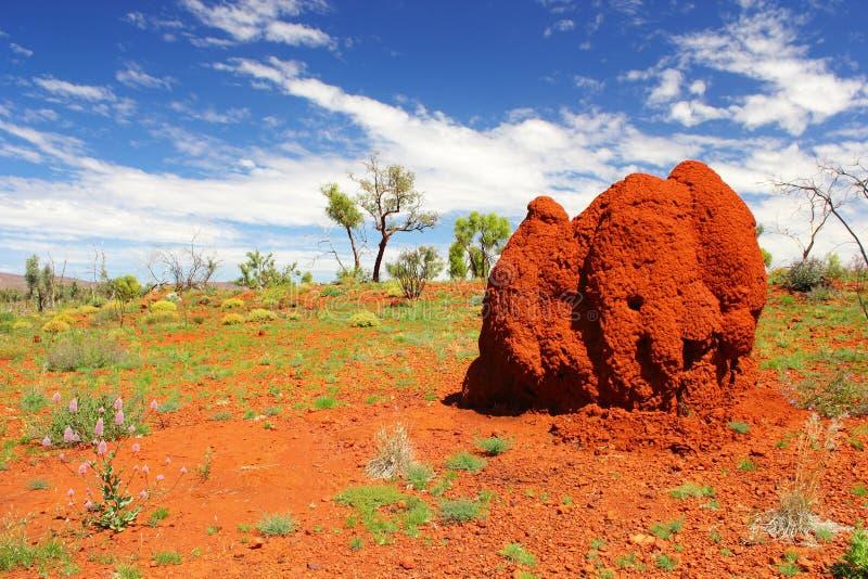 Monticello massiccio della termite nell'entroterra australiana, Australia occidentale fotografia stock