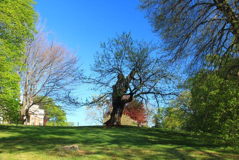 Monticello - Virgínia imagens de stock royalty free