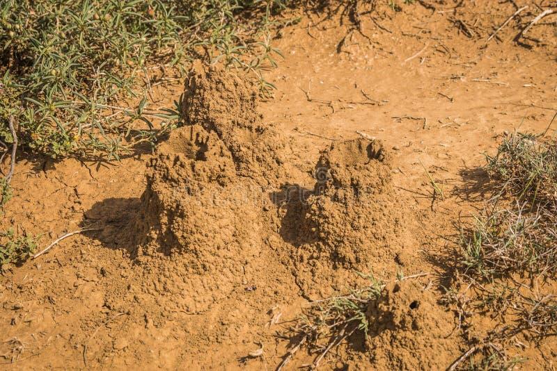 Monticule de la terre cimentée qui est maison du petit, pâle insecte doux-bodied qui vit dans de grandes colonies, Kenya images libres de droits