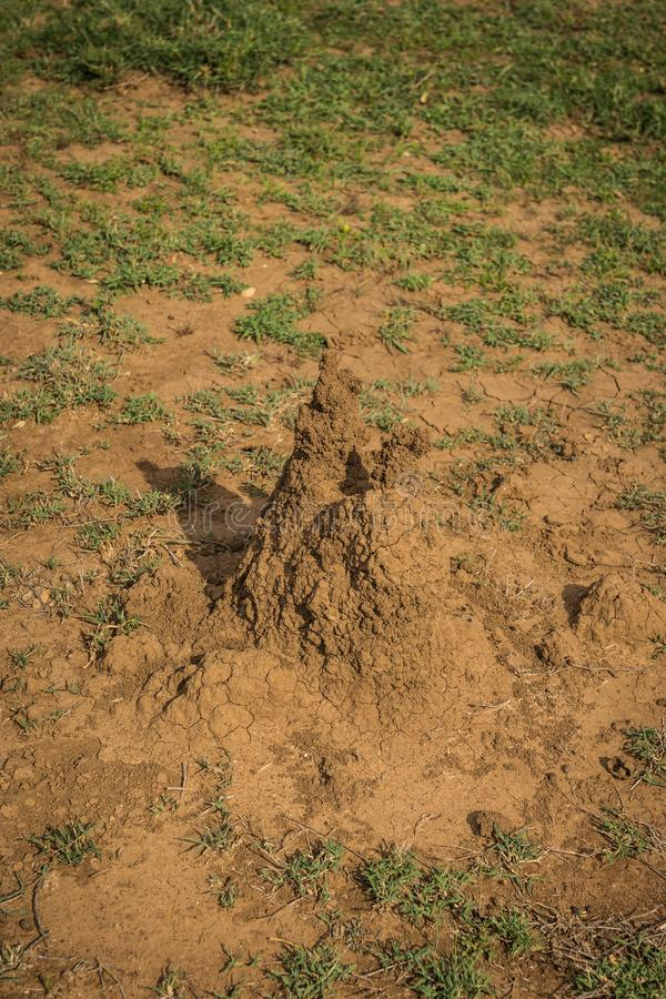 Monticule de la terre cimentée qui est maison du petit, pâle insecte doux-bodied qui vit dans de grandes colonies, Kenya photos stock